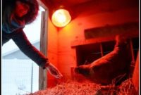 Heat Lamps For Chickens