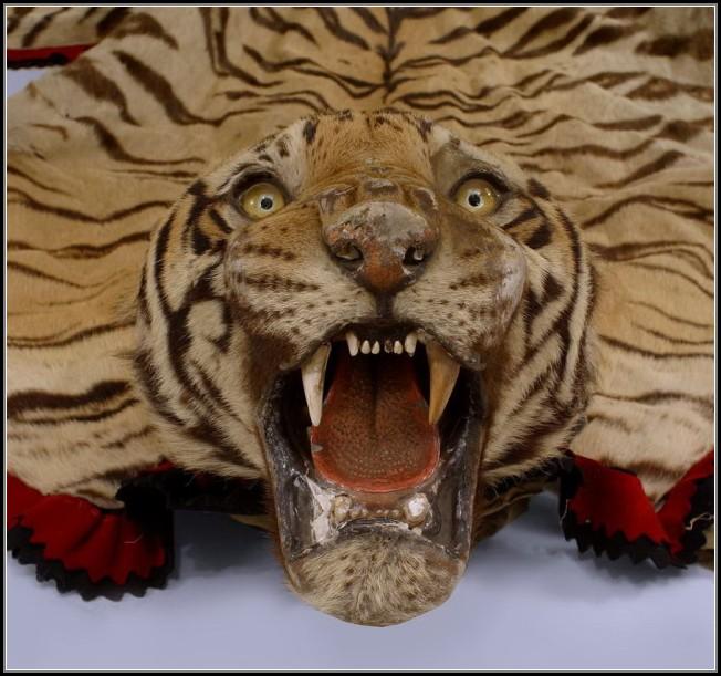 Fake Tiger Skin Rug Rugs Home Decorating Ideas Ojk6wo4qyz