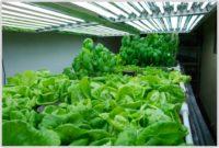 Grow Lamps For Indoor Plants