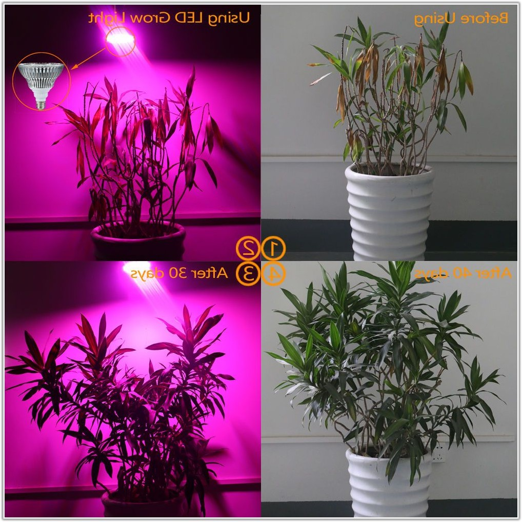 Uv Lamp For Indoor Plants